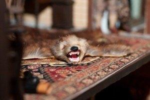 bonnie_broel-hunting_lodge-bearskin-rug